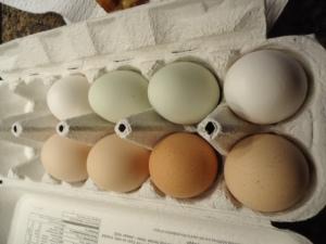 Really Fresh Eggs